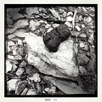 Wombat poo on mudstone and pebbles. Lerderderg State Park, Vic. Oct 2011.